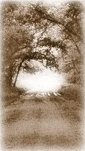 Swamp Road