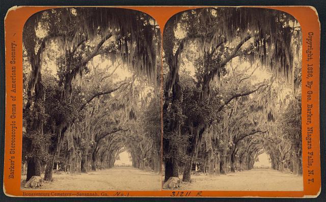 Savannah Spanish moss trees
