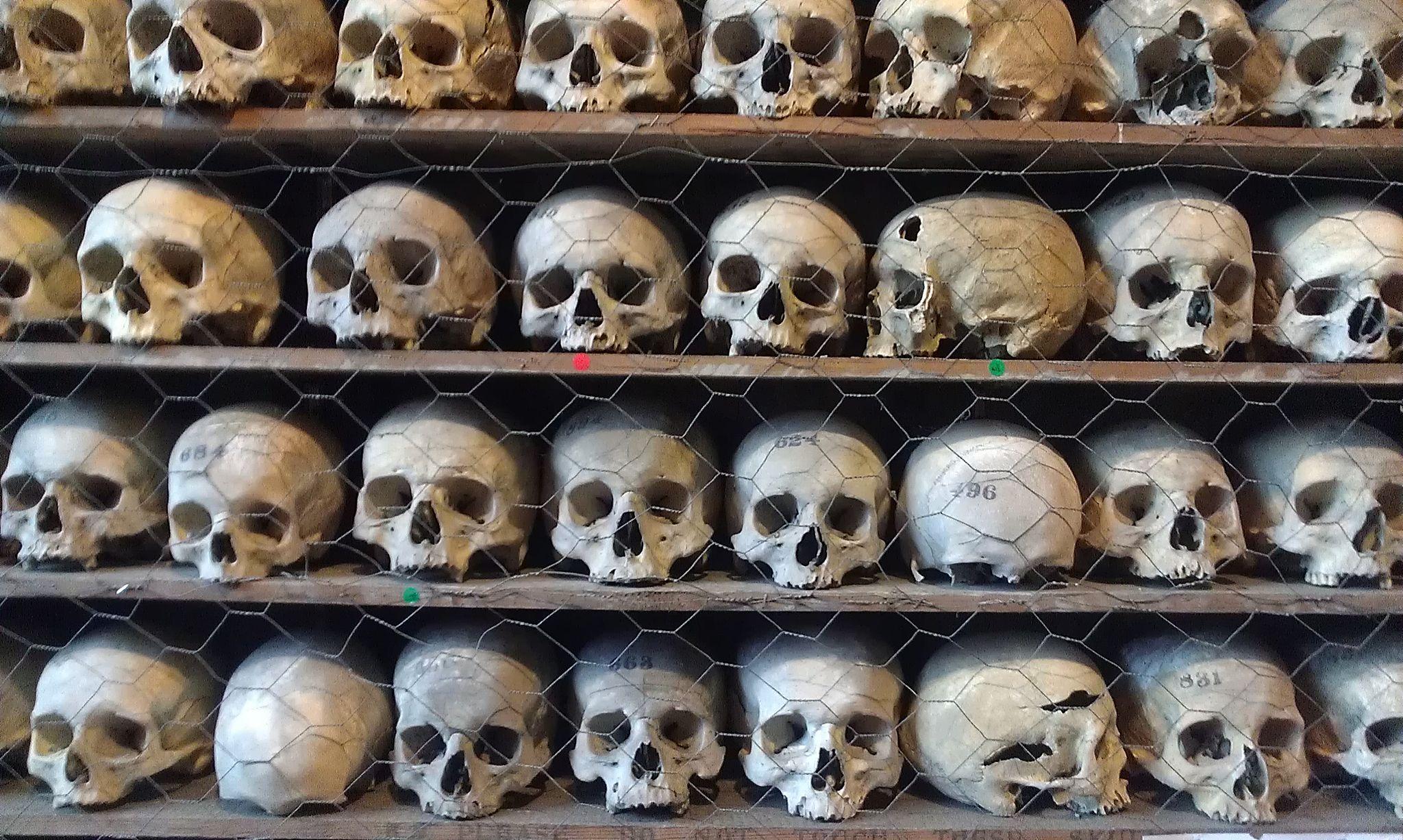 Human Skulls On Shelf