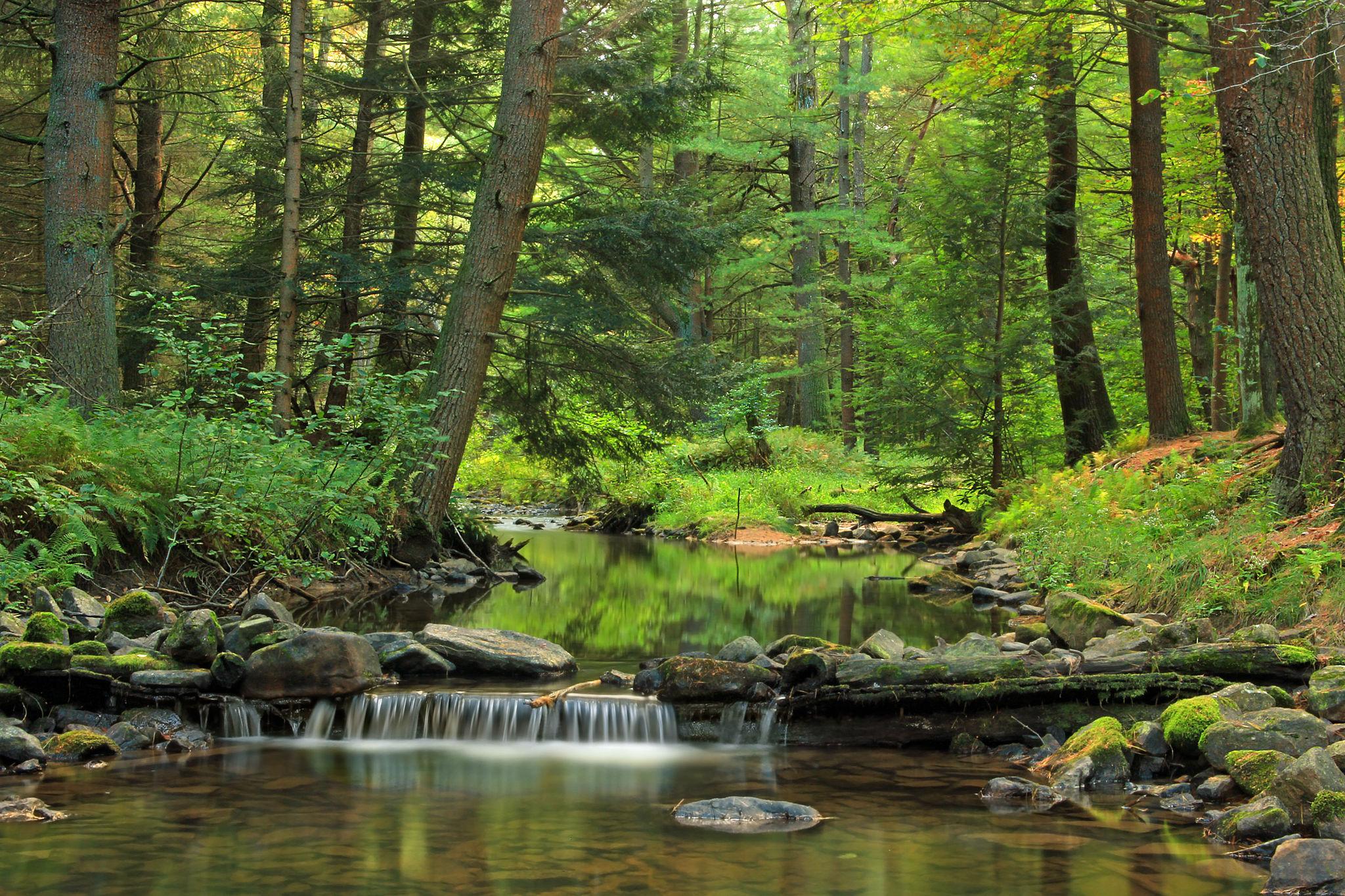white-deer-creek