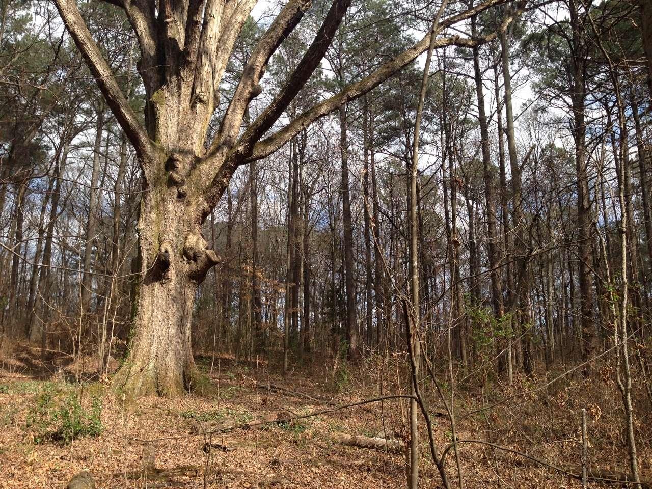 Winter Forest from Tsali Ghost Story Cherokee North Carolina